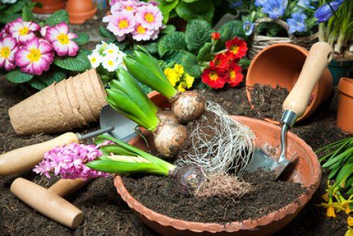 Online Gartenshops Test Von Preisen Angebotsbreite Und Service Dtgv